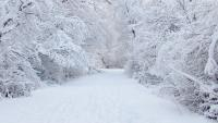 Sneeuw in de Ardennen - Ardennen.nl